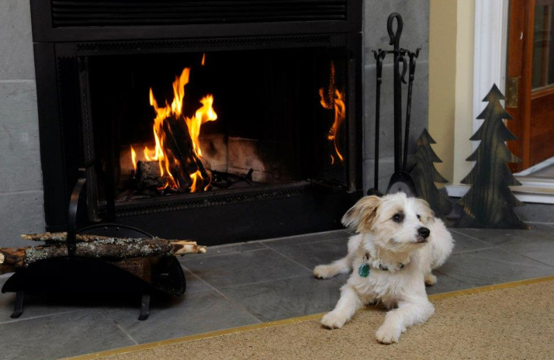 Pets welcome at Rocky Crest Golf Resort.