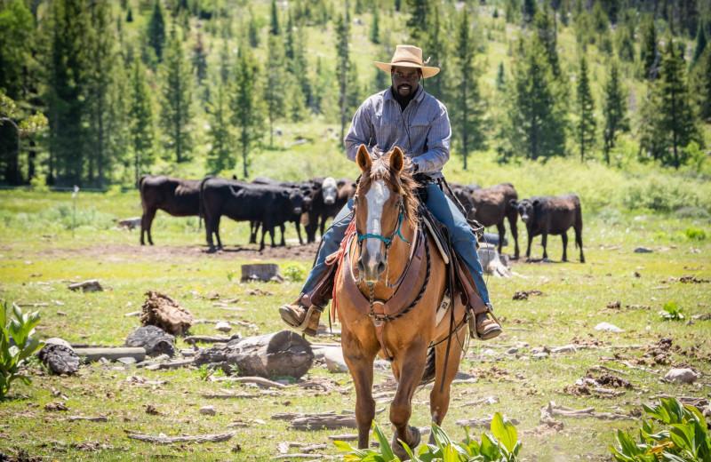 Cattle round-up at Vista Verde Ranch.