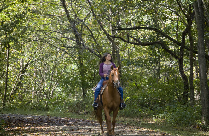 Horseback riding at Island Park Reservations.
