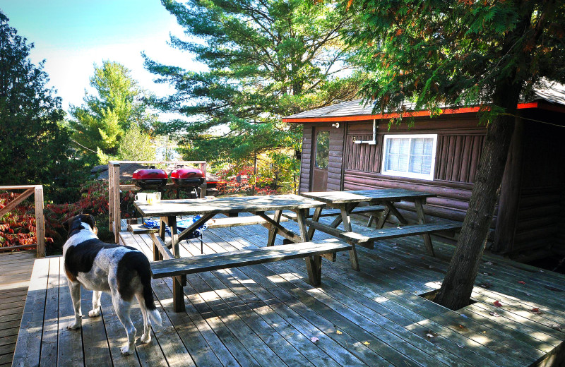 Cabin deck at Wolseley Lodge.