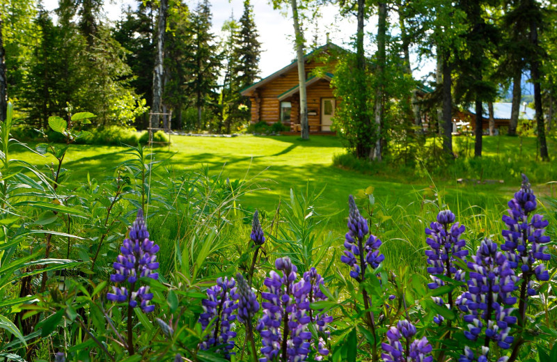 Exterior view of grounds Alaska Heavenly Lodge.