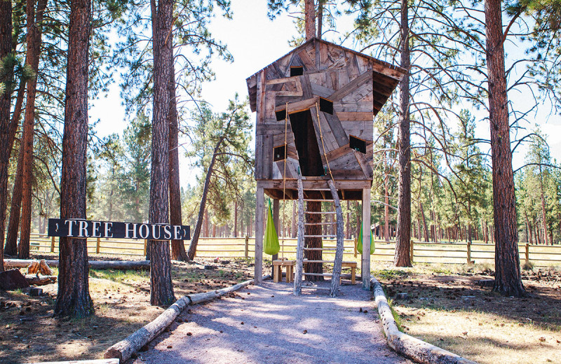 Tree house at The Resort at Paws Up.