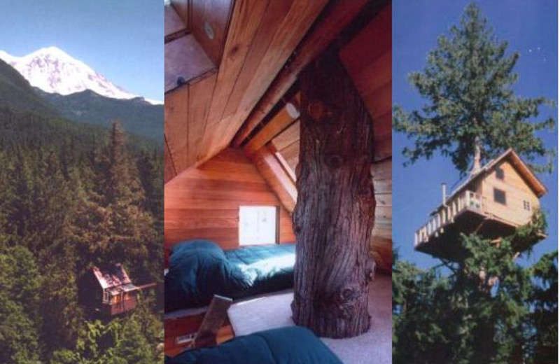 Exterior and interior view of Cedar Creek Treehouse.