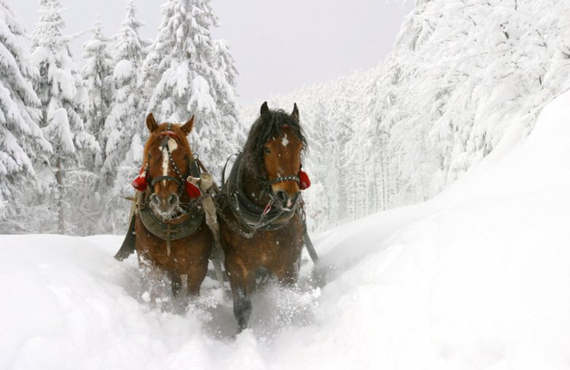 Sleigh ride at Fireside Resort at Jackson Hole.