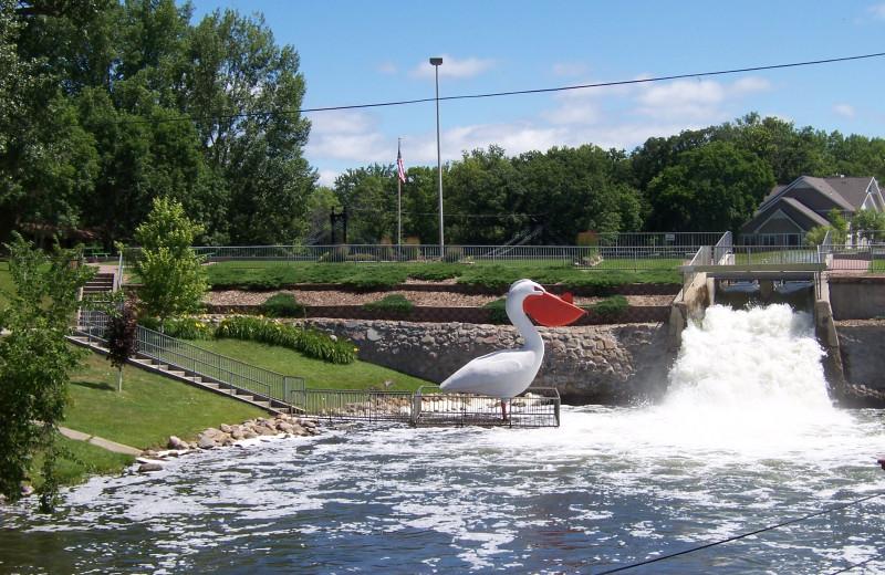 Pelican at Sherin Memorial Park.