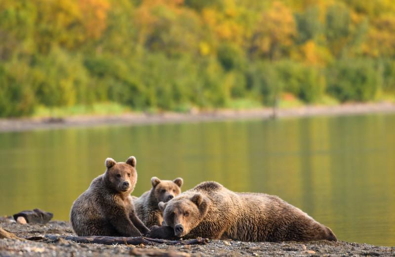 Bear at Salmon Catcher Lodge.