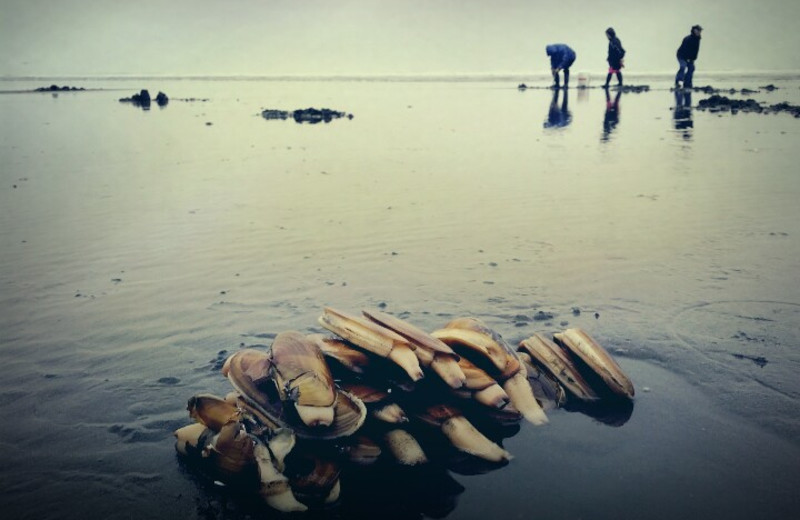 A group digging during the razor clamming season.