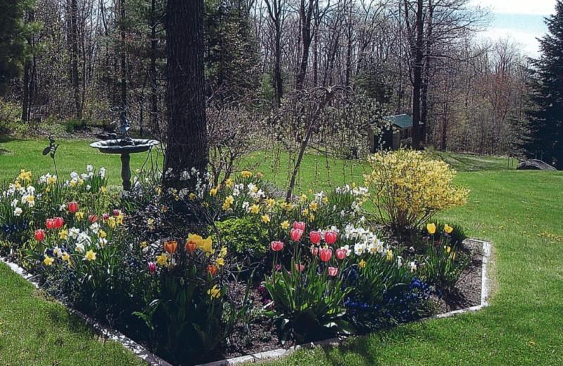 Garden view at Pilgrim's Rest B & B.