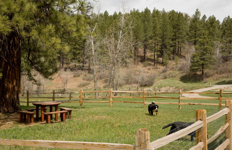 Dog park at O-Bar-O Cabins.