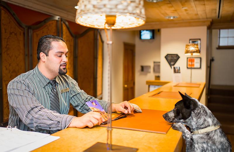 Pets welcome at Eldorado Hotel.