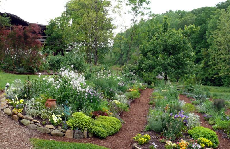 Garden at Hawk