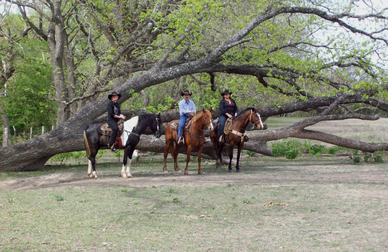 Horse activities at Twin Elm Ranch.