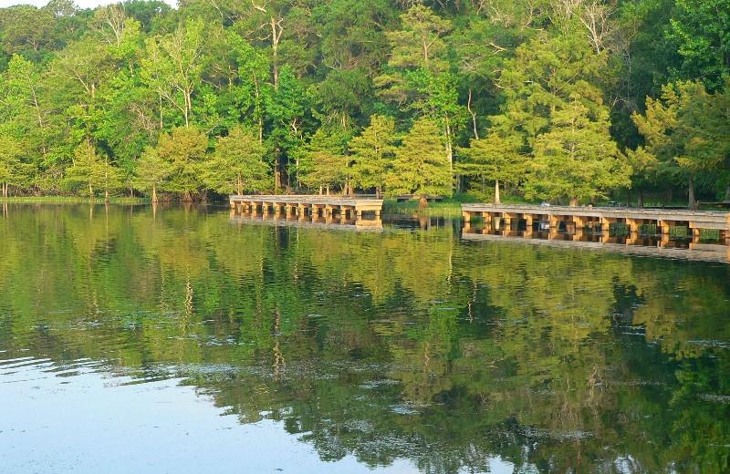 Lake at D'Arbonne Pointe.