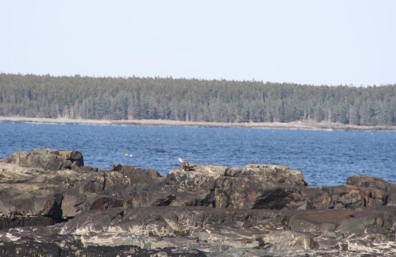 Acadian Nature Cruise near Aurora Inn & Motel.