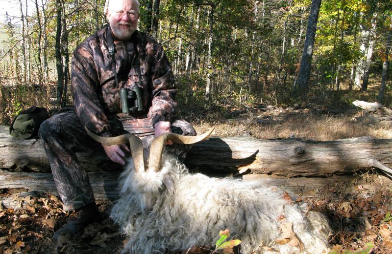 Texas Dall hunting at Caryonah Hunting Lodge.