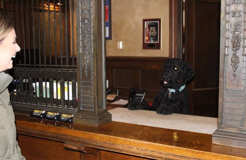 Pets welcome at Fitger's Inn.