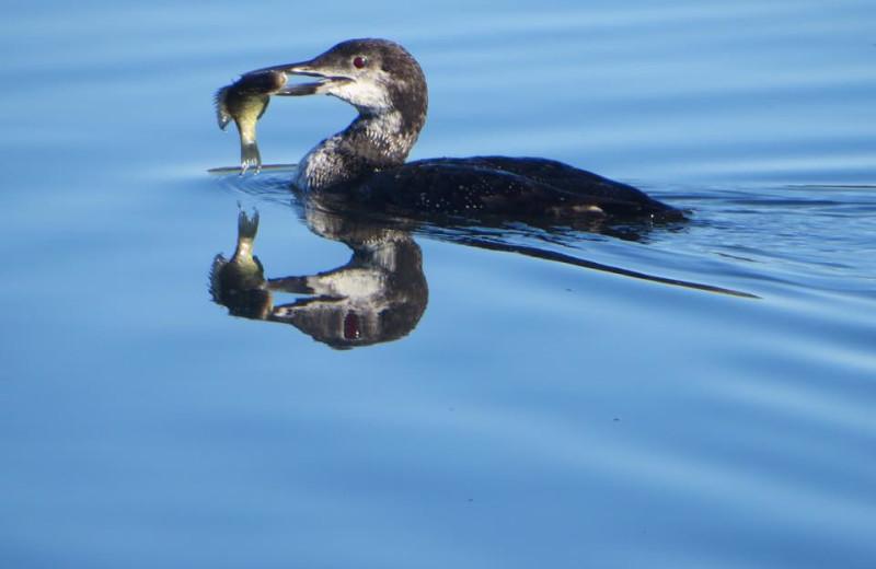 Wildlife at Sandy Pines Resort.