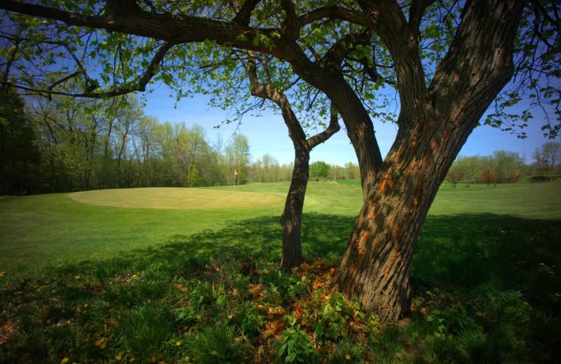 Golf course at Apple Island Resort.