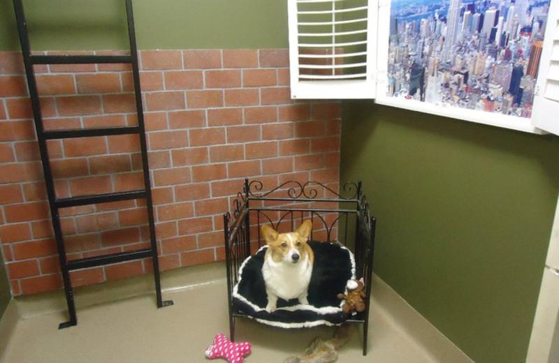 Pet suite at Furry Friends Resort.
