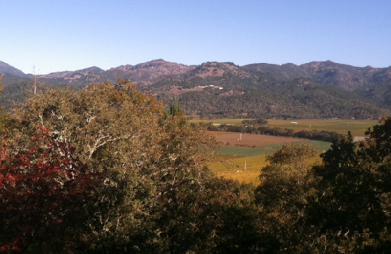 View from Zinfandel House.