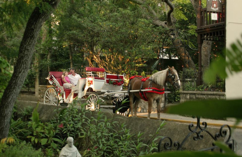Horse carriage at St. Francis Inn.