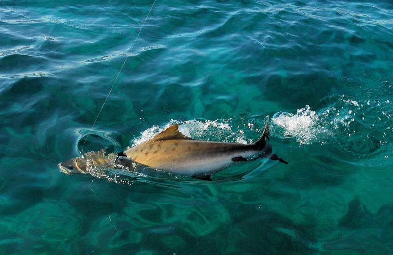Isla Holbox Fly Fishing Lodge (Holbox, Quintana Roo ...