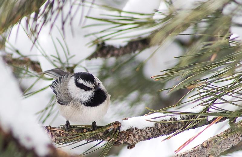 Birds at McGregor Mountain Lodge.