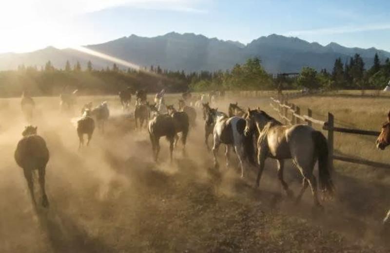 Horses at Rafter Six Ranch Resort.