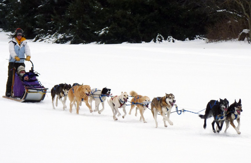 Dog sledding at Double JJ Resort.