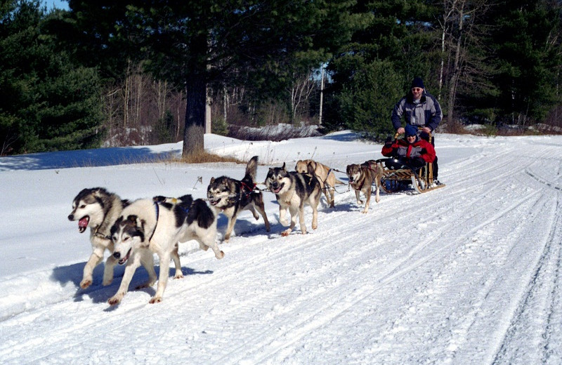 Dog sled at Algonquin Eco-Lodge.