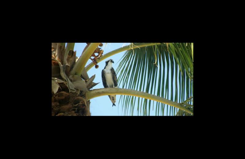 Bird at Sunrise Bay Resort & Club Condominium.