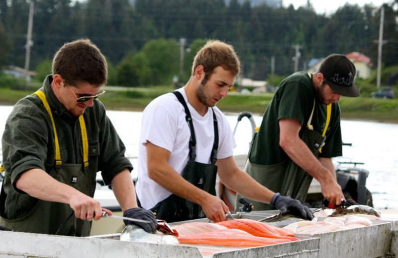 Cleaning fish at The Fireweed Lodge.
