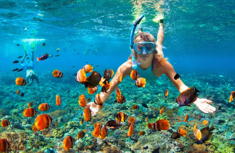 Snorkeling at Rent Key West Vacations.