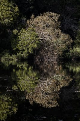 Green Reflection - Portugal, Sintra