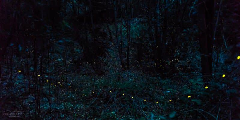 Firefly Season - Portugal, Sintra