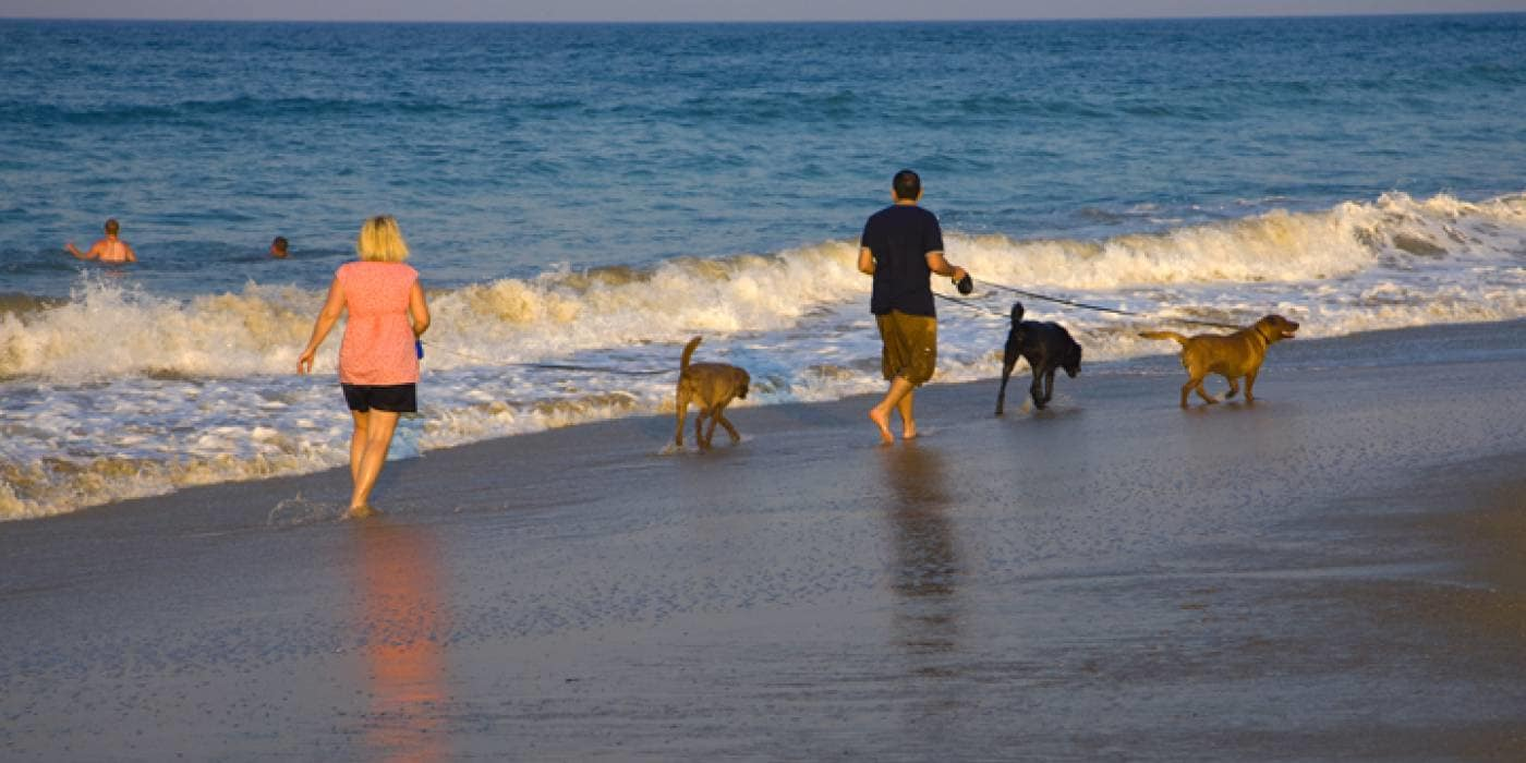a couple walks their dogs on beach in Kill Devil Hills