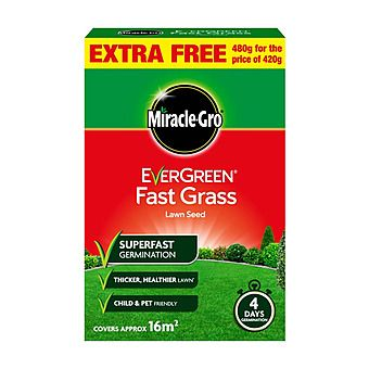 Picture of Miracle-Grow EverGreen Fast Grass Lawn Seed