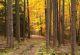 Waldweg beim Debach