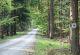 Waldweg bei Oberthulba