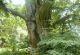 Rhön-Rundweg 13 Burkardroth Rotbuche bei Waldfenster