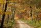Rhön-Rundweg 2 Großenlüder Herbst in der Bollheide