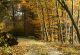 Rhön-Rundweg 1 Lütterz Herbstzeit in der Bollheide