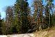 Rhön-Rundweg 1 Gieseler Forst Nord Bussardfichte