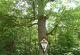 Rhön-Rundweg 1 Gieseler Forst Nord Herrgotsseiche