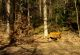Rhön-Rundweg 4 Gieseler Forst Süd Ruhebank im Forst