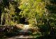 Rhön-Rundweg 1 Steiger Waldweg an der Haube