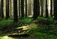 Rhön-Rundweg 1 Märzgrund Fichtenwald mit Moos