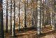Rhön-Rundweg 7 Petersberg Herbst im Forst