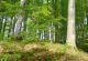 nordic-walking-2-hilders-gemeindezentrum-bild