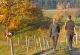 nordic-walking-gruen-poppenhausen-poppenhausen-bild